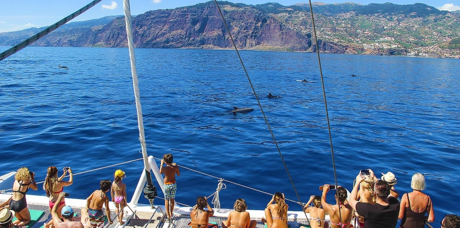 Dolphin and Whale Watching