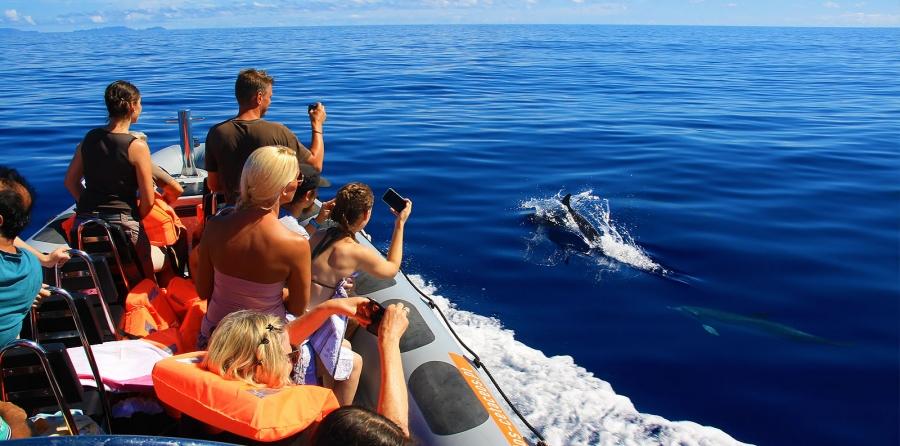Image result for rota dos cetaceos