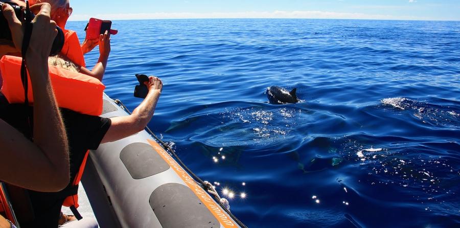 Rota dos Cetáceos